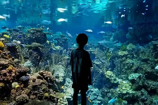 Image result for national aquarium