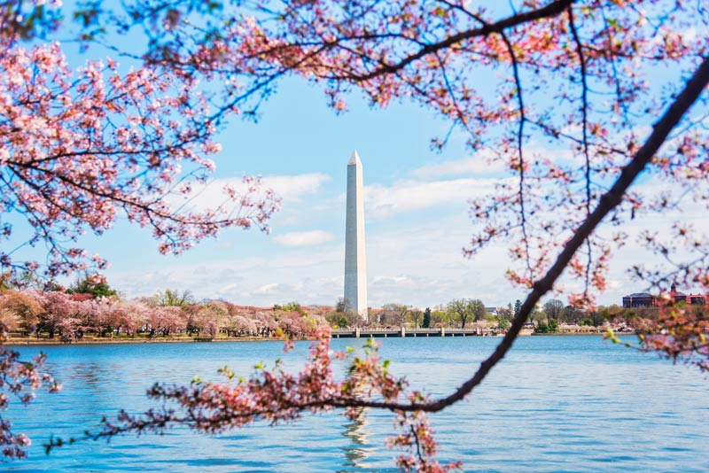 springtime-tidal-basin-cherry-blossoms-framing-the-washington-monument_ddc-photo-via-getty-images