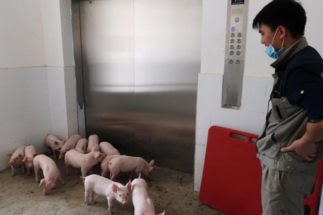 Worker waits for an elevator to transport pigs out of Guangxi Yangxiang's high-rise pig farm, at Yaji Mountain Forest Park in Guangxi